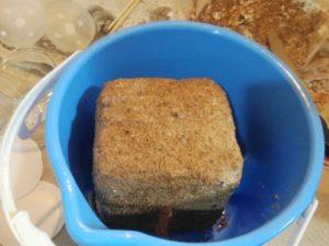 外側を剥いだ菌床ブロック