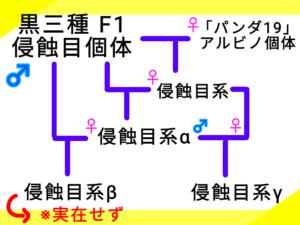 侵蝕目系の系図