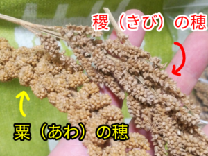 粟の穂と黍の穂