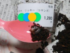 ヘラクレスリッキー幼虫 ①