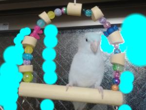 小鳥のブランコ作り ⑭