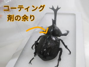 ダイソーの昆虫標本キットの工程 ⑧