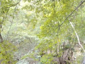 登山中に撮った景色