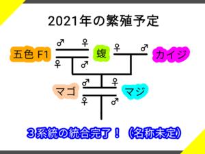 蝮系統の繁殖図